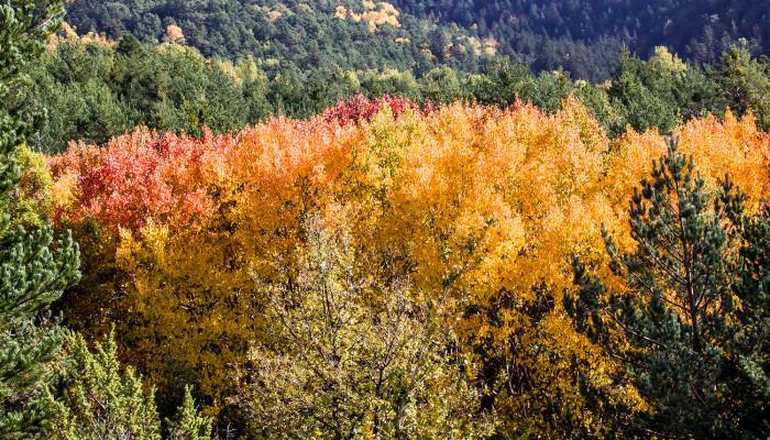 Valle de Aisa en otoño